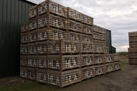 1 TONNE POTATO BOXES